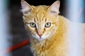 Resultado de imagem para 17 exposiçao internacional do clube do gato parana