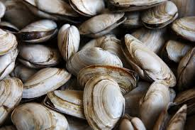 Image result for shellfish ban
