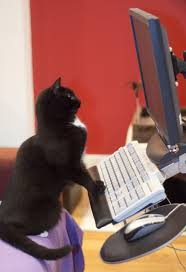 alicia tubbs novelist screenwriter cat at computer