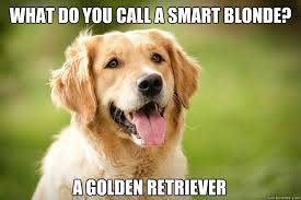 golden retriever memes | quickmeme via Relatably.com