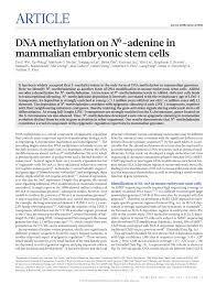 academic paper pdf dna methylation on n adenine in mam an academic paper pdf dna methylation on n6 adenine in mam an embryonic stem cells