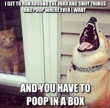 Animal Humor on Pinterest   Funny Animal Humor, Funny Animal ... via Relatably.com