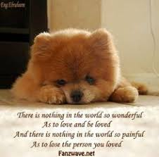 Dog Quotes Sad on Pinterest | Pet Loss Quotes, Sweet Dog Quotes ...