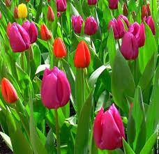 """Résultat de recherche d'images pour """"superbes fleurs"""""""