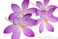 Resultat d'imatges de flores silvestres fondo blenco