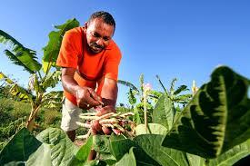 Resultado de imagem para Pequenos e médios agricultores do Nordeste
