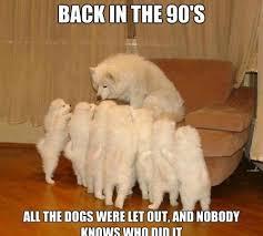 Funny Dog MemesYour Dog Plus via Relatably.com