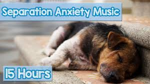 15 HOURS of Deep Separation Anxiety <b>Music</b> for <b>Dog</b> Relaxation ...