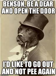 Old Money Dog - Imgflip via Relatably.com