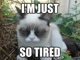 i'm just so tired - Poor Grumpy Cat - quickmeme via Relatably.com