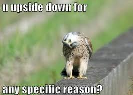 26 Adorable Animal Memes via Relatably.com