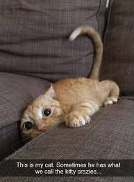 Crazy Cat Meme | Funny Pictures, Quotes, Memes, Jokes via Relatably.com