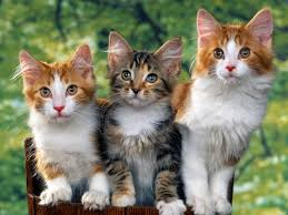 todo gatos.. - Página 3 Images?q=tbn:ANd9GcQoMj-FnWATYWMFm7mZKkDWit5n9DXanME6ISxFQhj3b-POaUC1