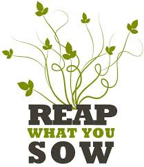 as you sow so shall you reap proverb