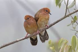 Resultado de imagem para Após 75 anos desaparecida, espécie de ave rara é redescoberta no Brasil