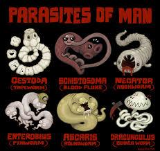 Image result for parasites
