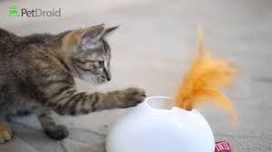 Pet Droid от Gigwi интерактивная <b>игрушка</b> для кошек - YouTube