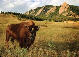 during this cu boulder essay prompt help stage        cu boulder essay   can you write my assignment from scratch