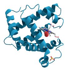 <b>Molecular</b> biology - Wikipedia