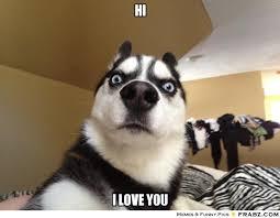 hI ... - Shocked Dog Meme Generator Captionator via Relatably.com