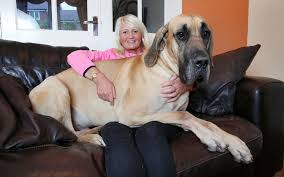 Zoinks! Meet the real-life <b>Scooby Doo</b> who's scared of everything ...