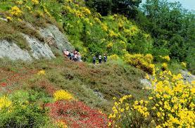 Flora dei calanchi