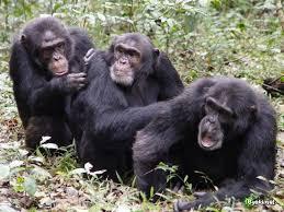 Тварини дотримуються моральних принципів і не пробачають подружньої зради -