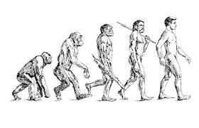 Image result for from monkey to humans