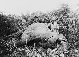 com middot in the morning the elephant had suddenly theodore roosevelt