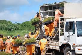 Image result for Rural Development
