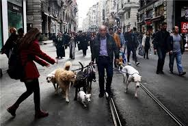 Image result for metropol çobanı