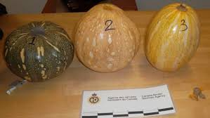 Woman charged in cocaine pumpkin bust at Trudeau airport | CBC ...