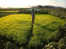 students reap lessons on sustainability organic farming students reap lessons on sustainability organic farming times of