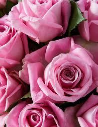 Fairtrade® <b>Pink Rose</b> Bouquet | M&S