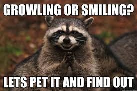 Growling or smiling? lets pet it and find out - Evil Plotting ... via Relatably.com