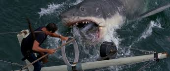 Image result for jaws 1975