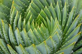 Image result for cactus