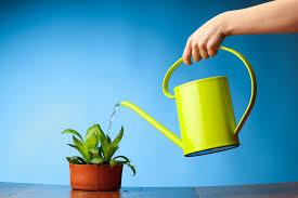 Risultati immagini per vaso innaffiare