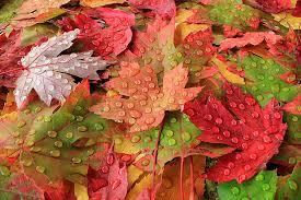Výsledek obrázku pro spadané listí