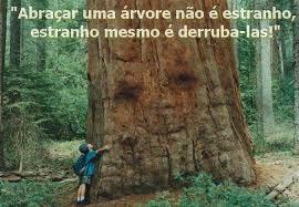 Resultado de imagem para fotos árvores