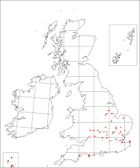 Falcaria vulgaris | Online Atlas of the British and Irish Flora