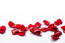 Bildergebnis für rosenblüten
