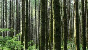 Image result for how dense are the oregon forests