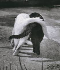 Risultati immagini per festa del gatto