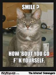 Funny rude cat meme | PMSLweb via Relatably.com