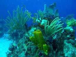 Resultado de imagen de fotos del mar