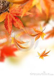 Resultado de imagen para quiet autumn sensations
