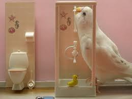 niches latini bathroom ajpg d a: budgie wants a shower  budgie wants a shower