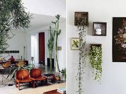 andoor plant living room adeas