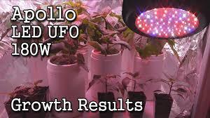 <b>Apollo</b> LED UFO <b>180W</b> Grow Light -Growth Results & Final Review ...